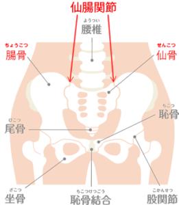 図解 仙腸関節